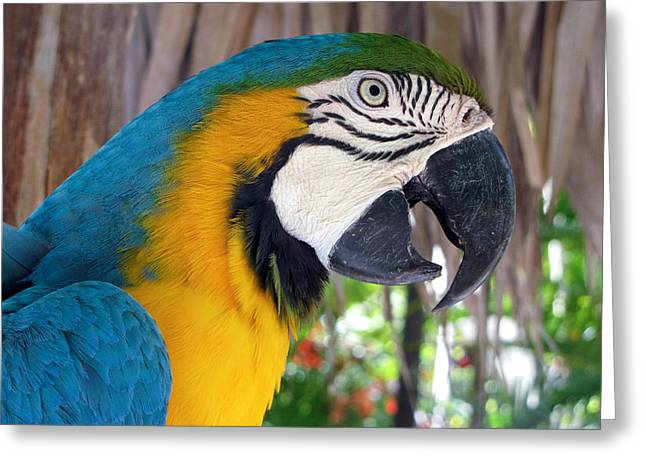 Harvey The Parrot 2 Greeting Card