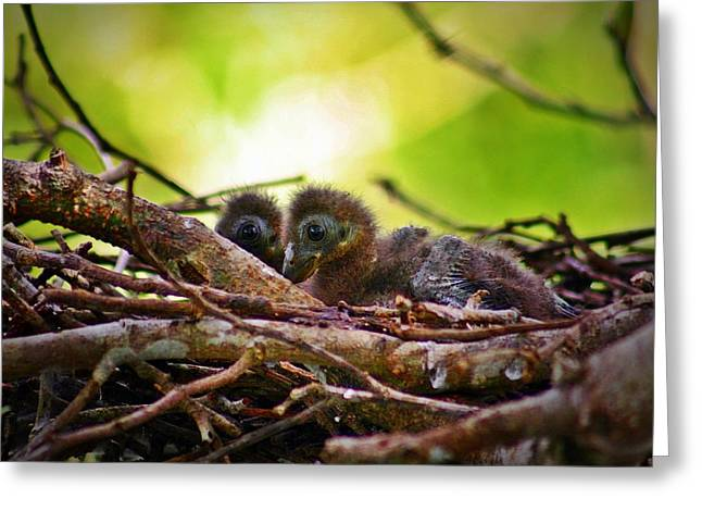 Greeting Card featuring the photograph Hoatzin Hatchlings In The Amazon by Henry Kowalski