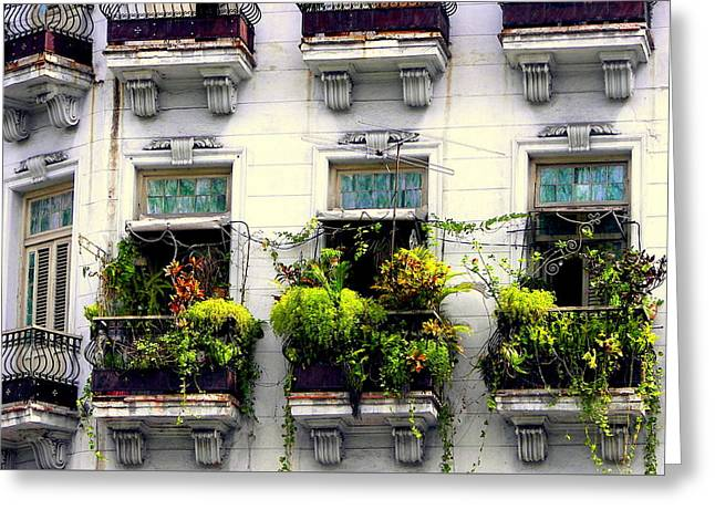 Havana Windows Greeting Card
