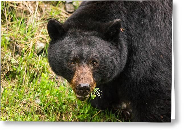 Having A Salad Before The Main Meal Is Always Healthy-wild Black Bear Greeting Card by Eti Reid