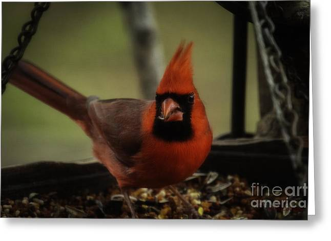 Having A Snack Greeting Card by Amanda Collins