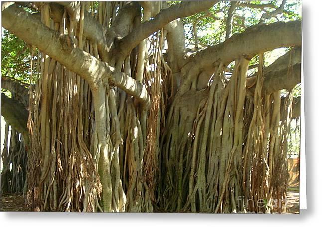 Hawaii Banyan Tree Greeting Card