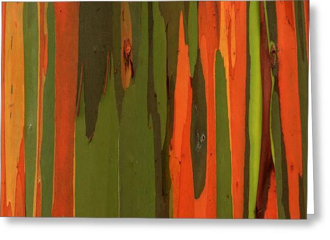 Hawaiian Eucalyptus Greeting Card by James Eddy