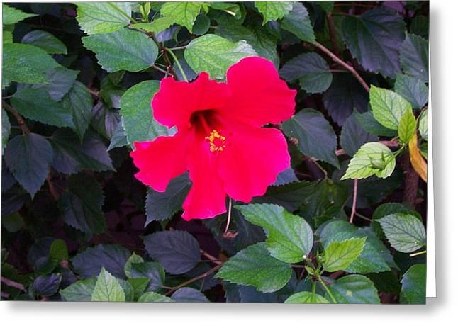 Hawaiian Flower Greeting Card