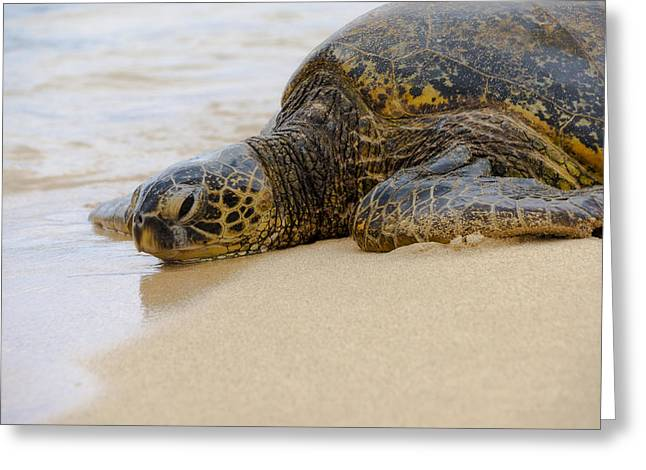 Hawaiian Green Sea Turtle 3 Greeting Card by Brian Harig