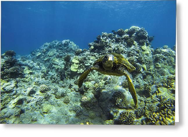 Hawaiian Green Sea Turtle Greeting Card by Brad Scott