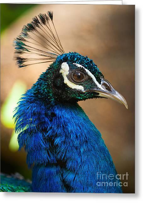 Hawaiian Peacock Greeting Card