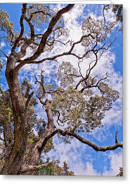 Hawaiian Sky Greeting Card
