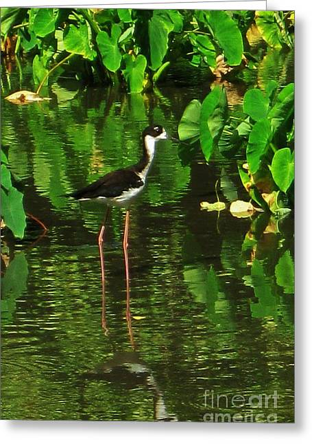 Hawaiian Stilt In The Taro Patch Greeting Card by Craig Wood