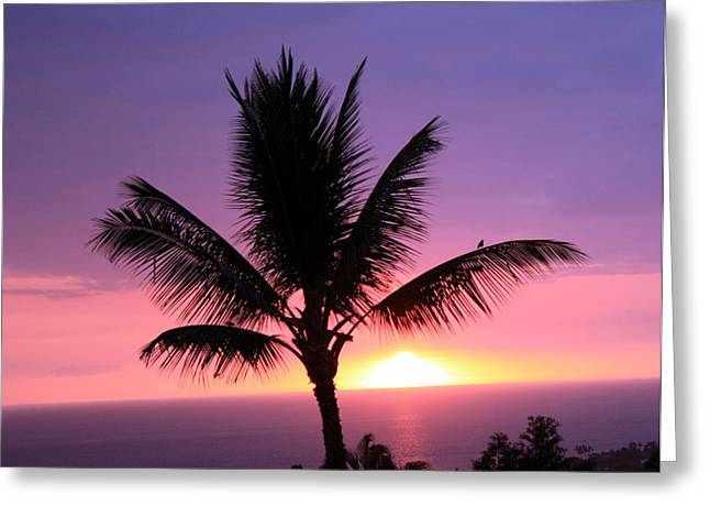 Hawaiian Sunset And Palm Greeting Card