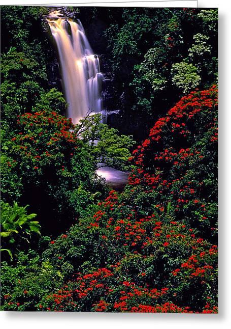 Hawaiian Waterfall With Tulip Trees Greeting Card