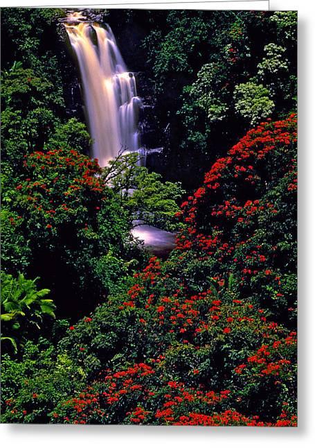 Hawaiian Waterfall With Tulip Trees Greeting Card by Marie Hicks