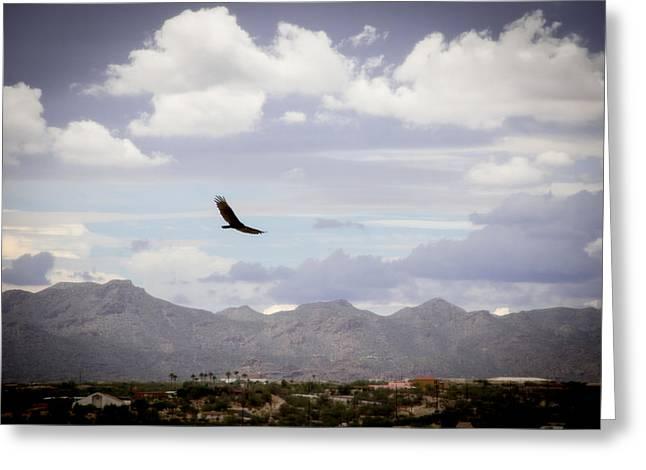 Hawk - 2013-242 Greeting Card by Judi FitzPatrick
