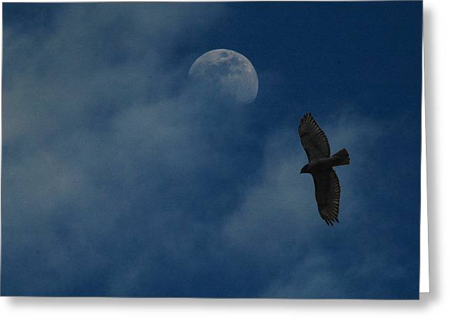 Hawk And Moon Coming Out Of The Mist Greeting Card by Raymond Salani III