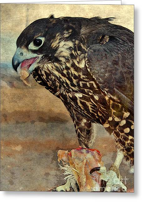 Hawk Dining On Chicken Greeting Card by Janice Rae Pariza