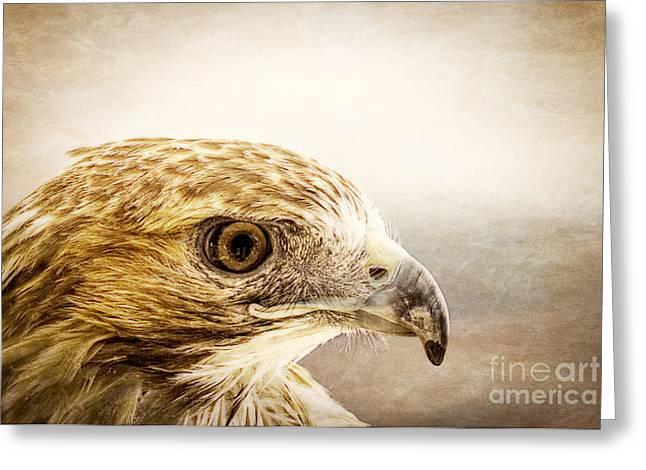 Hawk Greeting Card by Edward Fielding