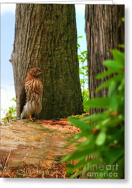 Hawk Eyes Greeting Card by Tap On Photo