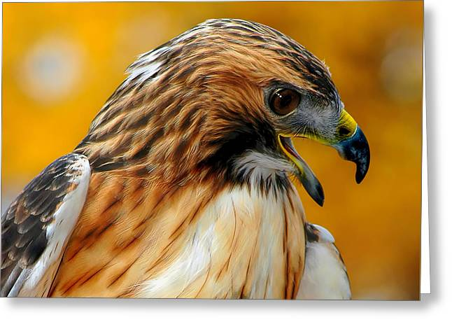 Hawk Hunt Greeting Card by Adam Olsen