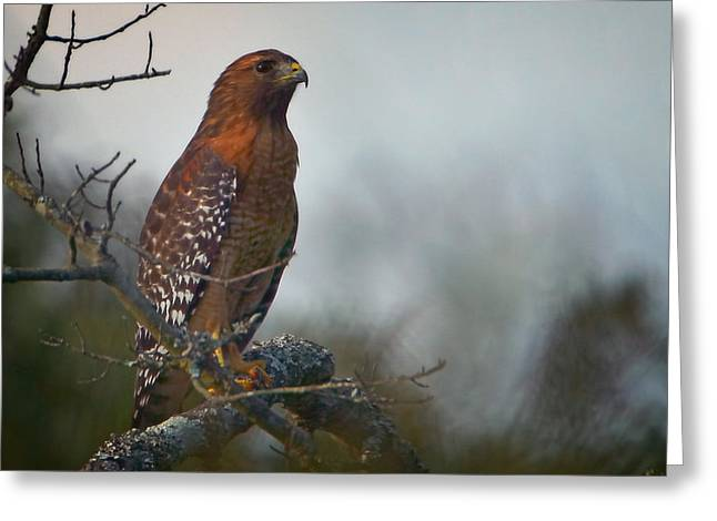 Hawk In The Mist Greeting Card