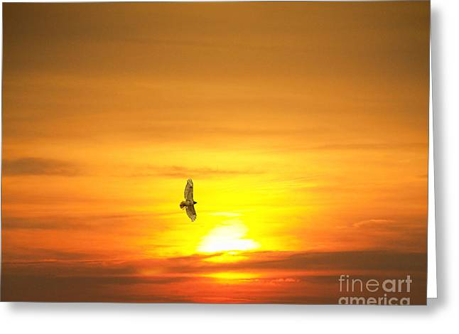 Hawk Into The Sunset Greeting Card