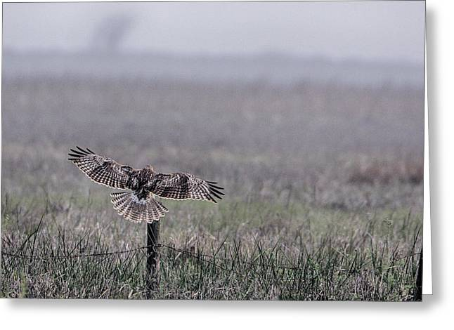 Hawk Landing Greeting Card