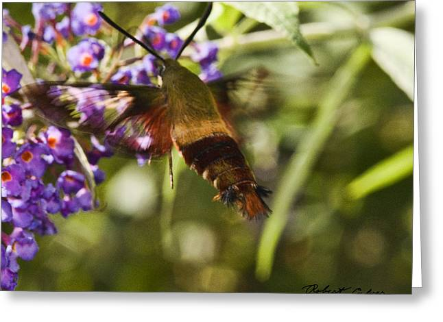 Greeting Card featuring the photograph Hawk Moth I by Robert Culver