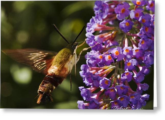 Greeting Card featuring the photograph Hawk Moth IIi by Robert Culver