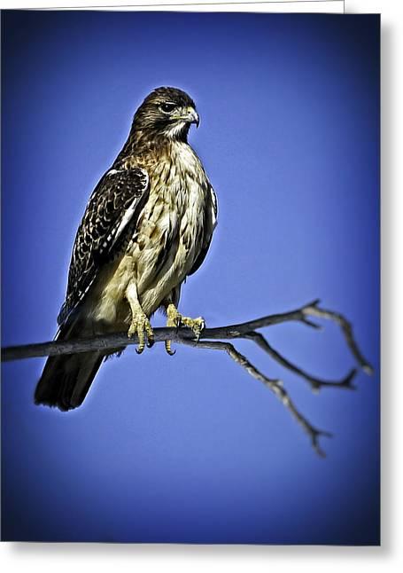 Hawk On A Branch V2 Greeting Card by F Leblanc