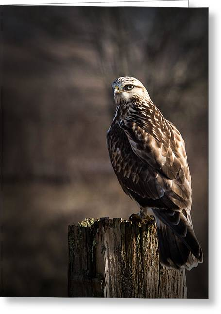 Hawk On A Post Greeting Card by Randy Hall
