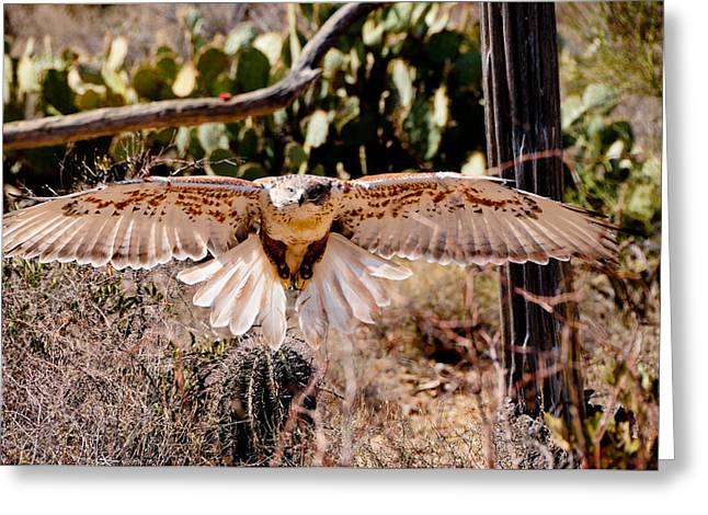 Hawk On The Hunt Greeting Card