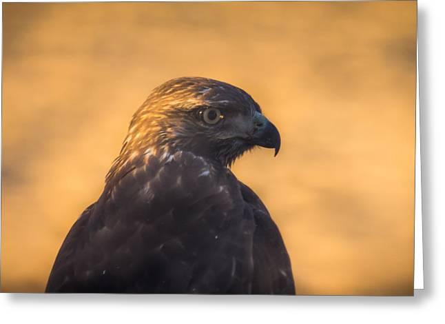 Hawk Profile Greeting Card by Marc Crumpler