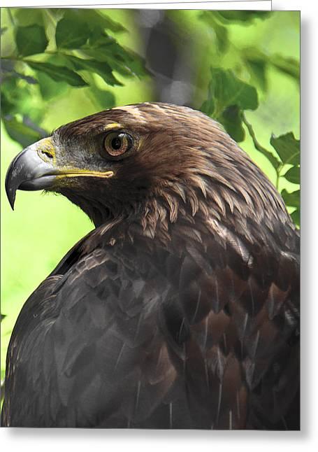 Hawk Scouting Greeting Card by Sotiris Filippou