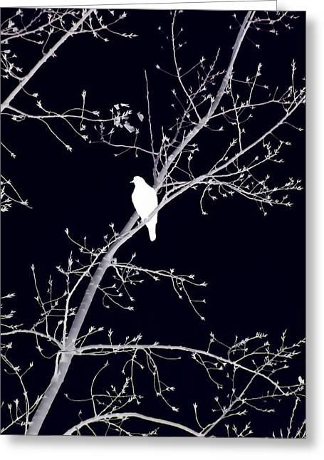 Hawk Silhouette On Black Greeting Card by Lesa Fine