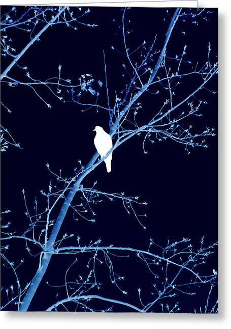 Hawk Silhouette On Blue Greeting Card by Lesa Fine