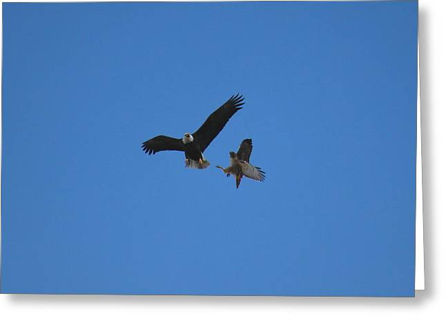 Hawk Vs Eagle Greeting Card