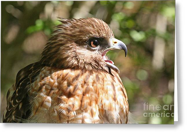 Hawk With An Attitude Greeting Card