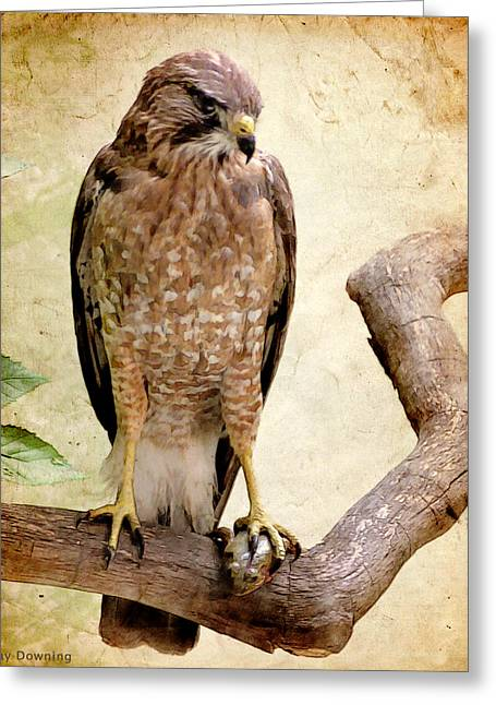 Hawk With Fish Greeting Card by Ray Downing