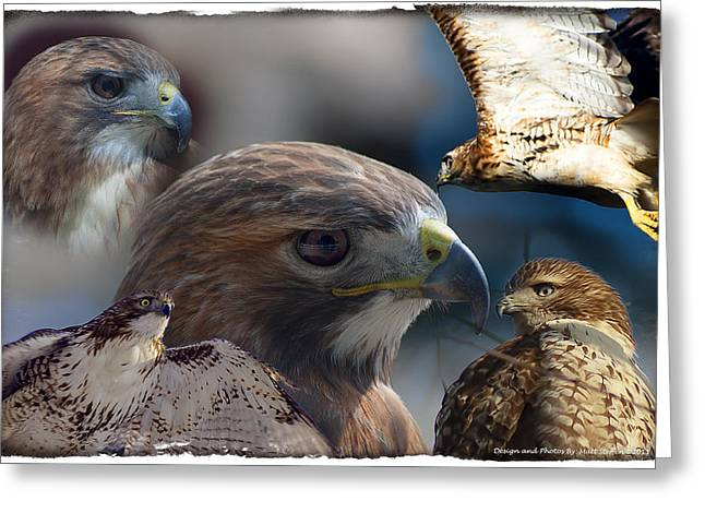 Hawks Greeting Card