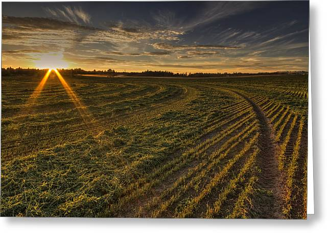 Hay And Sun Rays Greeting Card