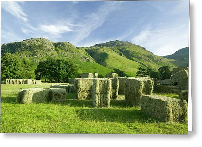Hay Bales Greeting Card by Ashley Cooper