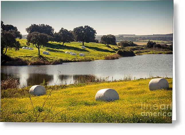 Hay Bales Greeting Card by Carlos Caetano