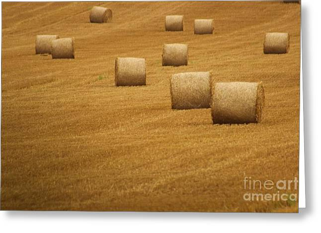 Hay Bales Greeting Card