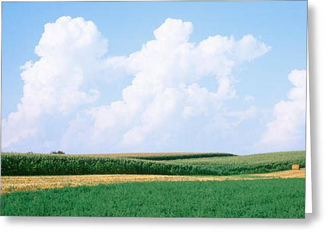 Hay Bales In A Field, Jo Daviess Greeting Card by Panoramic Images