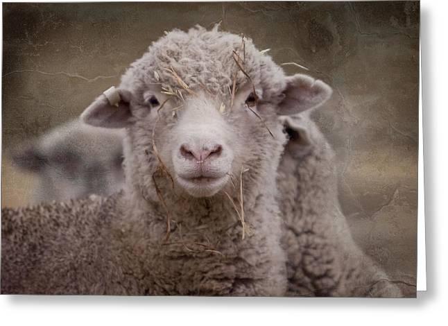 Hay Ewe Greeting Card by Michelle Wrighton