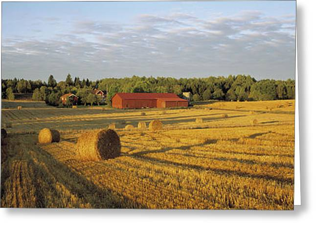 Hay Field Sweden Greeting Card by Panoramic Images