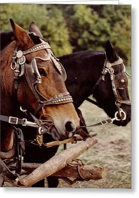 Hayride  Horses Greeting Card by Wide Awake Arts