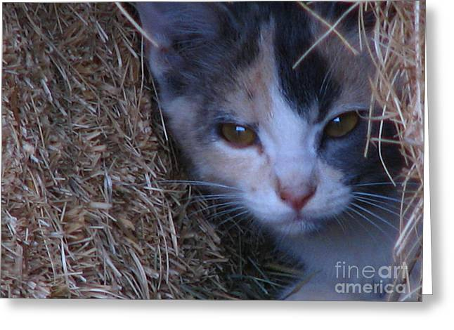 Haystack Cat Greeting Card by Greg Patzer
