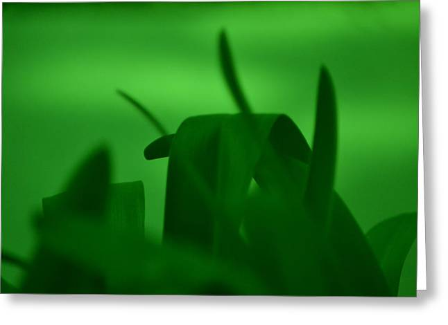 Haze Of Green Greeting Card by Kiros Berhane