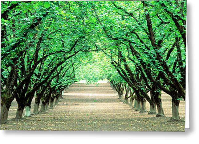 Hazel Nut Orchard, Dayton, Oregon, Usa Greeting Card