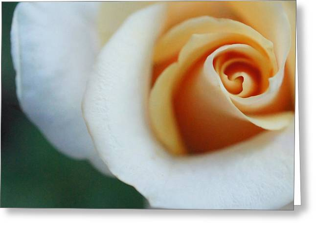 Greeting Card featuring the photograph Hazy Rose Squared by TK Goforth